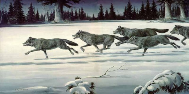 reece-thechase-wolfpack